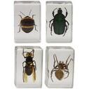 CELESTRON - Celestron 44408 3D Böcek Örneği Seti