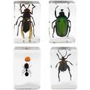 CELESTRON - Celestron 44425 3D Böcek Örneği Seti
